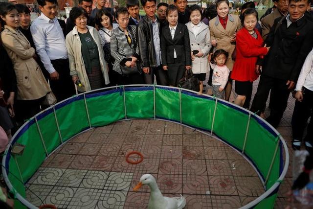 Người dân vây quanh xem con vịt diễn trò trong sở thú.Sở thú trung tâm Bình Nhưỡng thành lập năm 1959. Ngày nay, đây là ngôi nhà của hơn 5.000 động vật hoang dã, theo NYT.