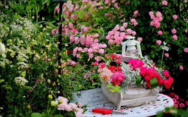 Mọi người vô cùng bất ngờ với vườn hồng trên sân thượng.