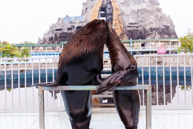 Bên cạnh các hoạt động nghệ thuật giải trí; đến với Happy Land, du khách còn được tham quan hệ sinh thái phong phú; các tuyệt tác cây kiểng mô phỏng thế giới cổ tích Walt Disney; thưởng thức xiếc hải cẩu, múa rối nước và các hoạt động tại làng nghề truyền thống.