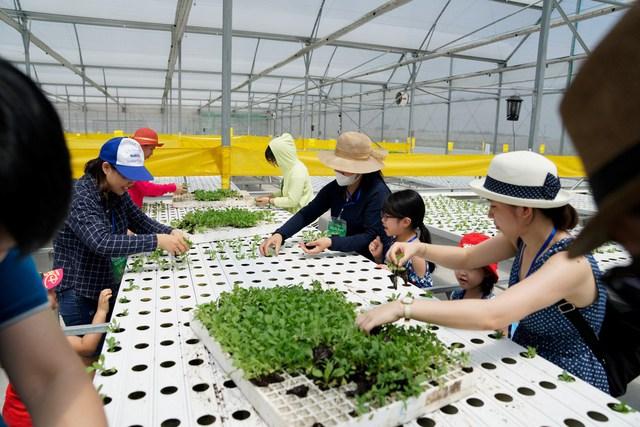 Đặc biệt nhất là người tham gia chương trình được tự tay trải nghiệm trồng rau thủy canh qua thử thách làm nông dân giỏi. Các bé hứng khởi cổ vũ cho ba mẹ để giành chiến thắng về cho đội của mình.