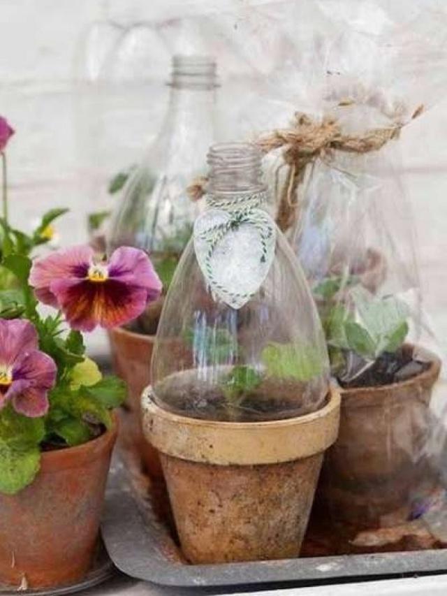 Nếu lo lắng cho những cây non trước thời tiết giá lạnh, mưa bão hoặc nắng gắt gao, bạn có thể tạo một nhà kính nhỏ nhắn từ những chai nhựa cũ để bảo vệ những cây non.