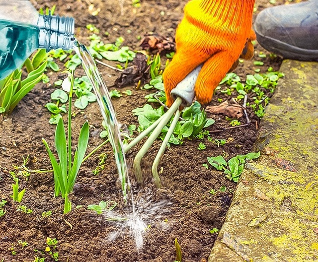 Phun giấm 25% lên những nơi bạn không muốn cỏ dại mọc lên. Lặp lại nhiều lần cho đến khi hết sạch cỏ.