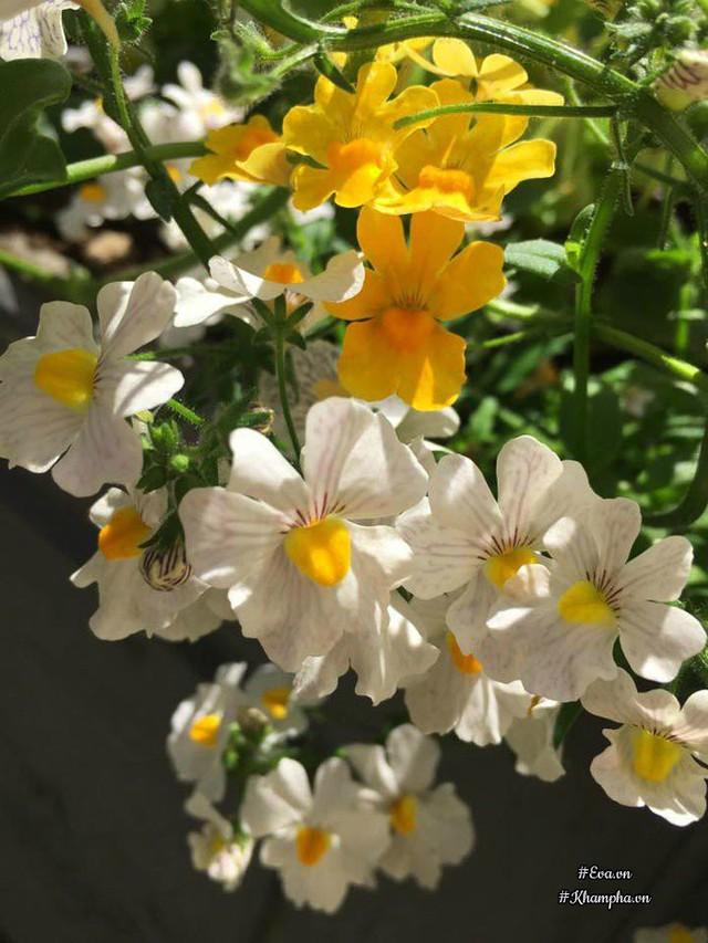 Các loại hoa nở rực rỡ trên ban công.