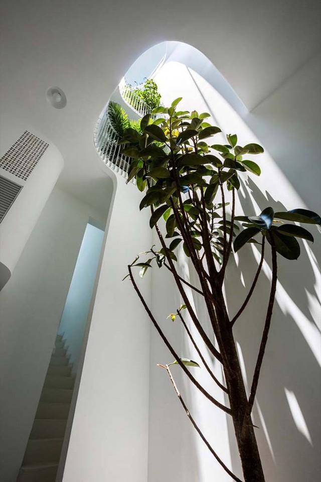 Cây xanh được trồng ở khắp mọi nơi trong nhà, đặc biệt là dưới giếng trời.