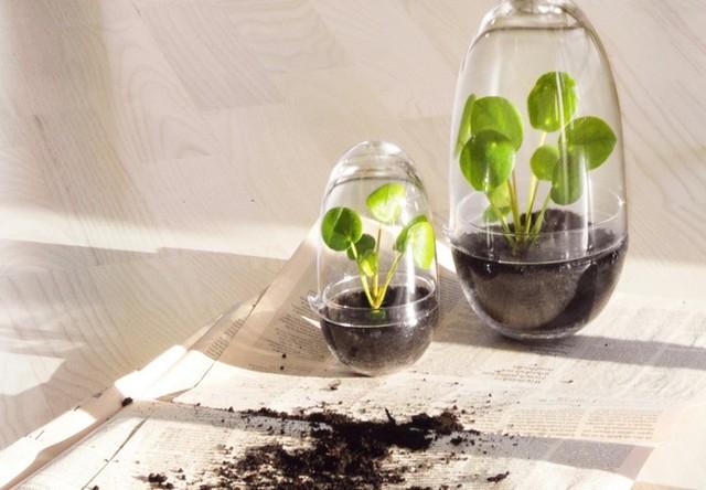 Ở bất kỳ đâu, chúng cũng giúp không gian trở nên mềm mại, duyên dáng và sống động hơn. Ảnh: Gardenista.
