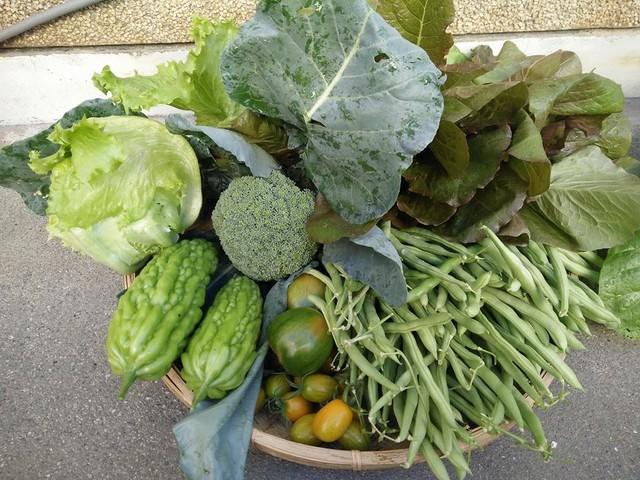 Với chị, lúc thu hoạch thành quả, nhìn những ngọn rau xanh mơn mởn, những trái cây sạch được hái ngay tại khu vườn nhà mình khiến chị cảm thấy rất hạnh phúc.