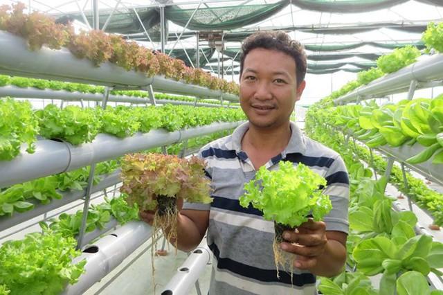 Thu tiền triệu mỗi ngày nhờ trồng rau thủy canh
