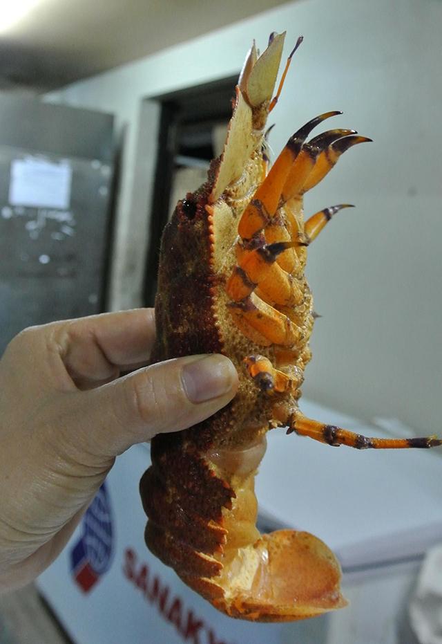 """Thuộc vào dạng hải sản quý hiếm bậc nhất nên loại tôm mũ ni đỏ này thường có giá """"chát"""" từ 1,8 - 2 triệu đồng/kg"""
