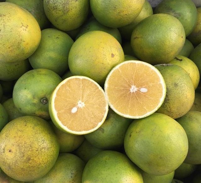 Cam xoàn, cam mật có được trồng ở Việt Nam không và cách phân biệt hai loại cam này