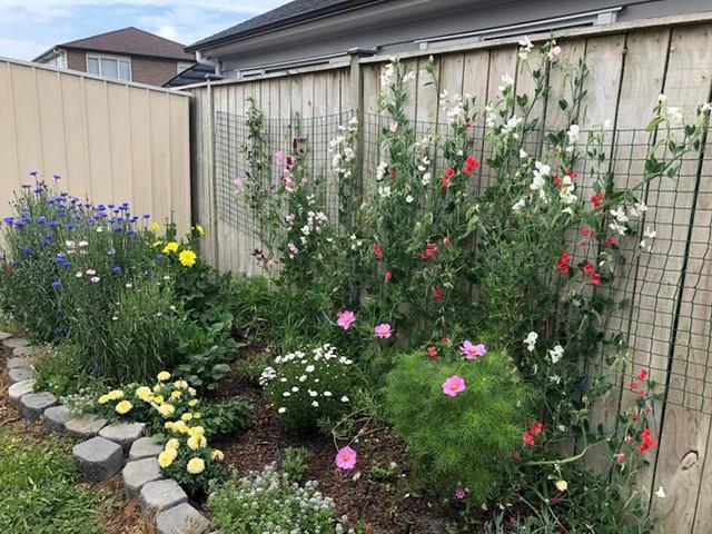 Chị Mơ thường tranh thủ chăm sóc hoa sau giờ làm. Vì có con nhỏ và đi làm nên thời gian cho vườn cũng hạn hẹp.