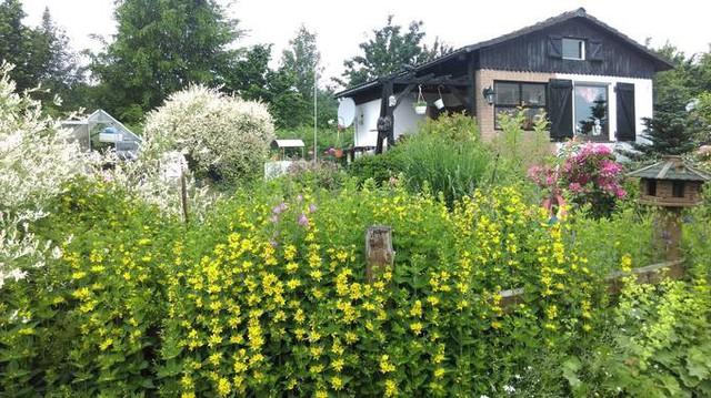 Để khoảng sân trước xanh tươi và đầy sắc màu, anh Hùng lựa trồng nhiều cây hoa với màu hoa khác nhau như mẫu đơn cánh vàng, hồng, vài bụi hoa tulip với cánh màu tím... Khu vườn anh có trên 50 loại hoa khác nhau, luôn khoe sắc rực rỡ.