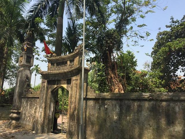 Cây sưa đỏ nằm trong khuôn viên chùa làng Phụ Chính.