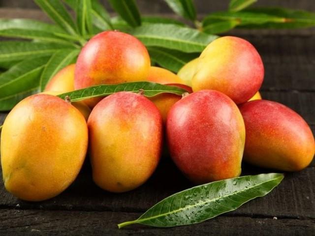 Từ lâu, xoài vùng Bắc Úc (Northern Territory Mango) vốn nổi tiếng là loại hoa quả có giá trị cao.