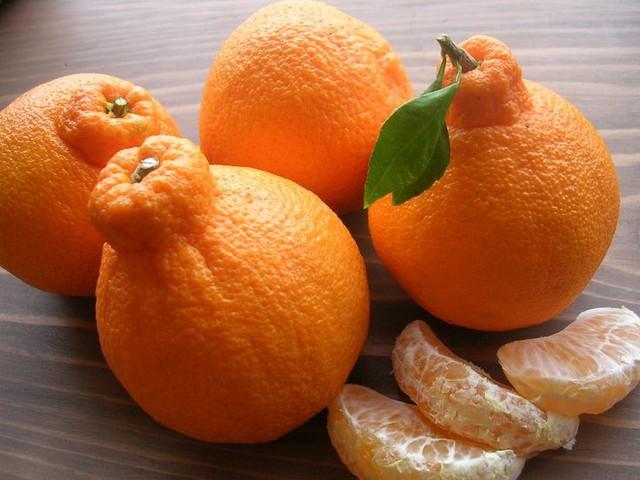 Đây là sản phẩm lai tạo giữa quýt và cam, điều này khiến hương vị của nó cân bằng lí tưởng giữa vị ngọt và chua đến hoàn hảo khiến người ăn chỉ thử một lần cũng sẽ bị mê hoặc.