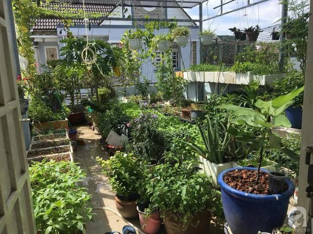 Góc sân thượng nhiều nắng với đủ loại rau.