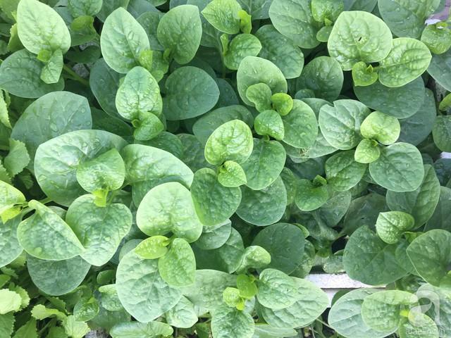 Anh Hưng trồng nhiều loại rau sạch cho gia đình.