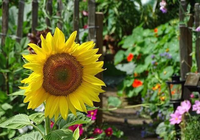 Đều đặn mỗi năm, Arthur bổ sung thêm nhiều loại cây, rau và hoa mới.