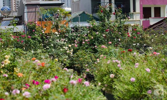 Vườn hoa đua nhau khoe sắc.