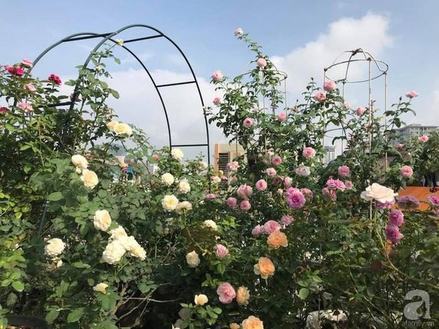 Trên sân thượng có khoảng 350 chậu hoa hồng.