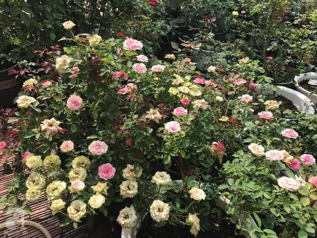 Những chậu hoa nở rộ trong nắng.