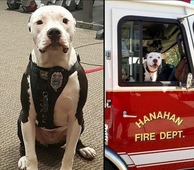 Bé chó Jake bị bỏ rơi tại một vụ hỏa hoạn khi mới lên 3. Nay chú đã có cơ hội được làm việc với những chàng cứu hỏa, người đã quyết định nhận nuôi Jake từ thảm kịch hồi đó.