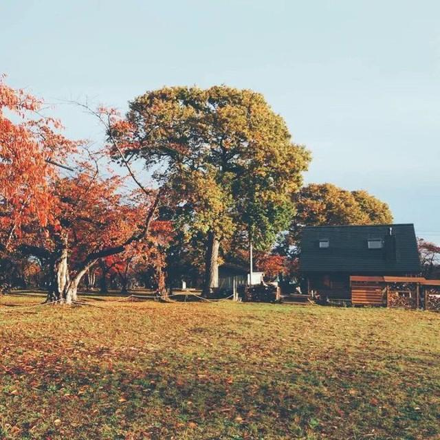 Ngôi nhà gỗ đẹp như tranh vẽ bên khung cảnh mộng mơ, bình yên của thiên nhiên trong lành xung quanh.