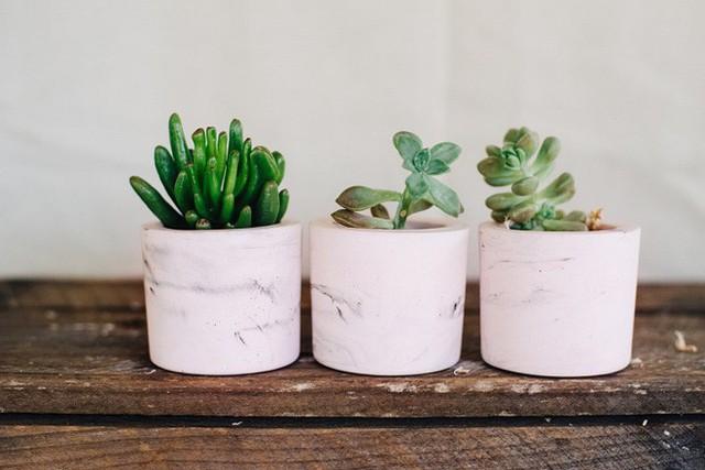 Những bồn cây nhỏ xinh xắn đáng yêu được làm từ chất liệu cẩm thạch như thế này sẽ vô cùng ưng mắt nếu bạn đặt ở bàn làm việc hay trong phòng ngủ và phòng bếp.