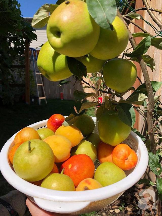 Những ngày cuối tuần hay những khi rảnh rỗi, vợ chồng anh cùng hai con lại ra vườn, tạo không gian đầm ấm, cùng nhau nấu nướng những món ăn ngon, hay cùng nhau làm vườn, thu hoạch rau trái. Hạnh phúc đối với anh vô cùng giản dị và bình yên như thế.