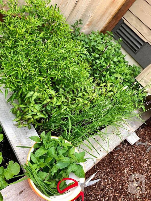 Khu vườn được trồng nhiều loại rau sạch.