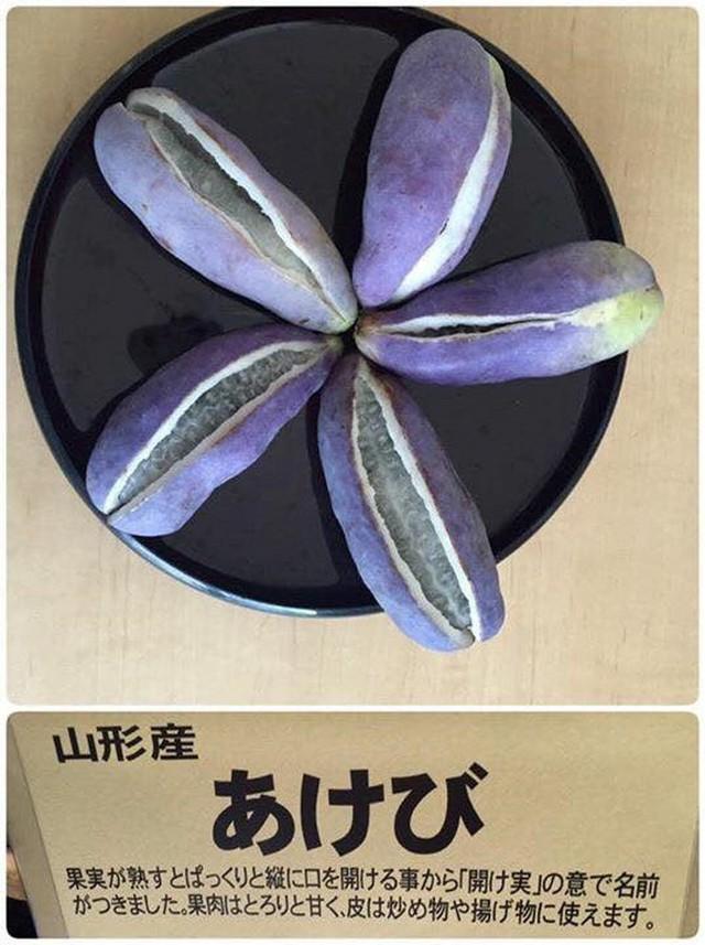 Theo một số thông tin từ một trang website về Ẩm thực Nhật Bản thì hạt Akebi còn được dùng để chế biến thành dầu. Tuy nhiên, do quả mọc dại và khan hiếm, giá thành khá đắt đỏ nên loại dầu Akebi thường được dùng như một loại thảo dược.
