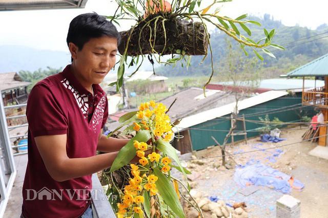 Ngoài chơi địa lan Trần mông, A Chia còn sưu tầm cả các loài lan khác như phi điệp vàng