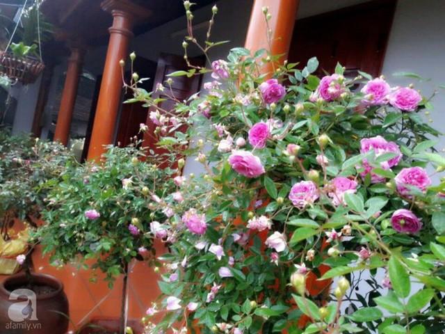 Đối với chị Trọng, trồng hoa hồng, gắn bó với hoa, được chăm sóc từng gốc hồng trong vườn nhà giúp chị thêm yêu cuộc sống. Đến với hồng và gắn bó với loài hoa vạn người mê này như một mối duyên lành, như món quà ý nghĩa mà cuộc sống mang lại cho chị và gia đình.