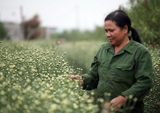 """Chị Chu Thị Hương đã có thâm niên trồng họa mi nhiều năm nay cho biết: """"Dù họa mi với gia đình là trồng thêm nhưng mỗi năm tính tổng thu nhập sau khi trừ hết chi phí cũng trên 100 triệu đồng""""."""
