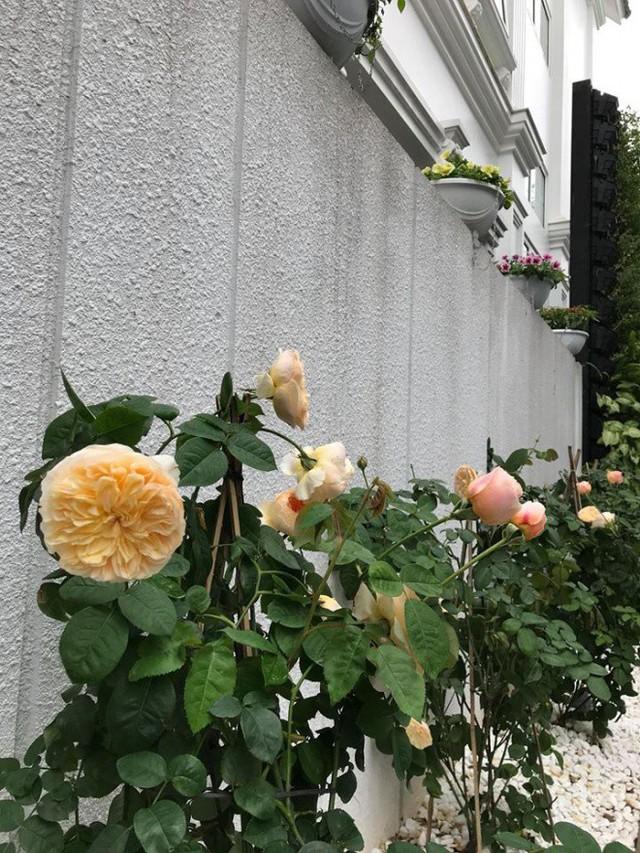Mỹ Dung thể hiện sự khéo léo khi chăm sóc nhiều loại hoa và bố trí cây trồng rất đẹp mắt, khoa học.