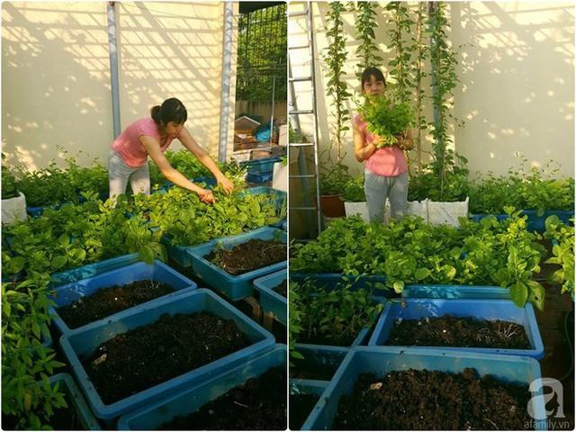 Chị Kim Oanh bên vườn rau trên sân thượng.