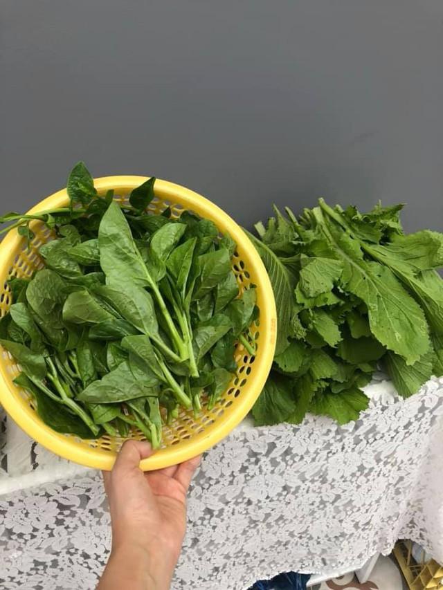 Thành quả nhỏ, niềm vui lớn của các thành viên khi được thu hoạch rau trong vườn.