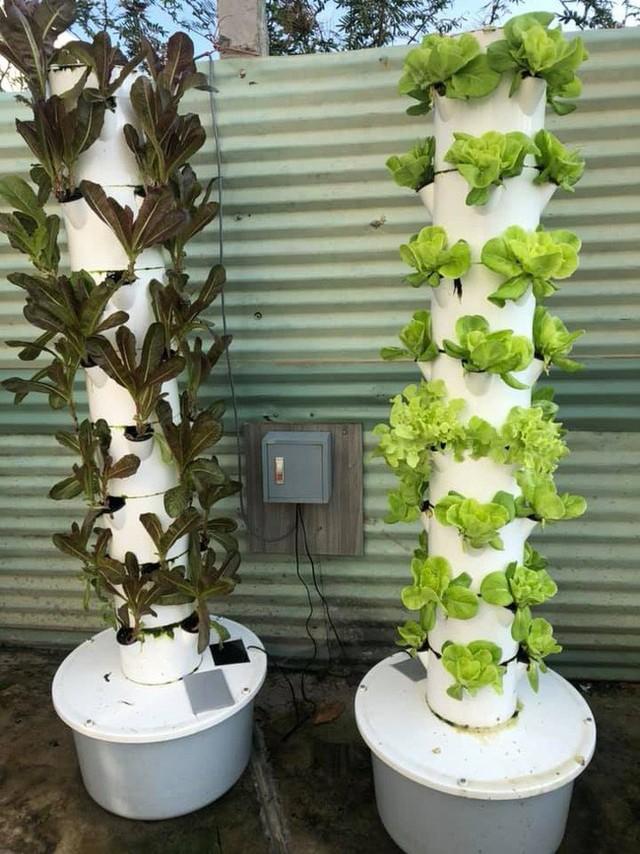 Một góc trồng rau thủy canh.