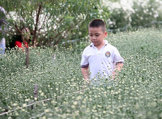 Không hiếm khi bắt gặp những bé trai có mặt tại những địa điểm chụp ảnh với cúc họa mi dù nhiều bậc phụ huynh cho rằng, các bé trai thường không thích chụp ảnh với hoa.