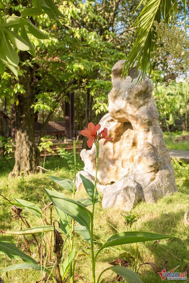 Trong vườn, Ánh Tuyết trồng nhiều hoa, đặt hòn non bộ làm cảnh.