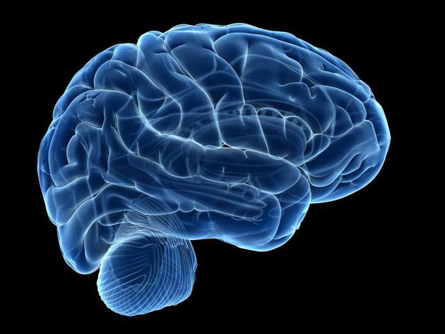 Não bộ là nơi hứng chịu hậu quả nặng nề nhất khi gặp áp lực.