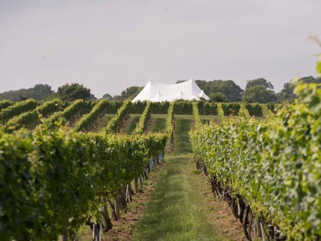Cư dân cũng có thể thưởng thức rượu làm ngay tại Hamptons, cũng như gặp nhiều người nổi tiếng khác nếu đến vườn nho Wolffer Estate.