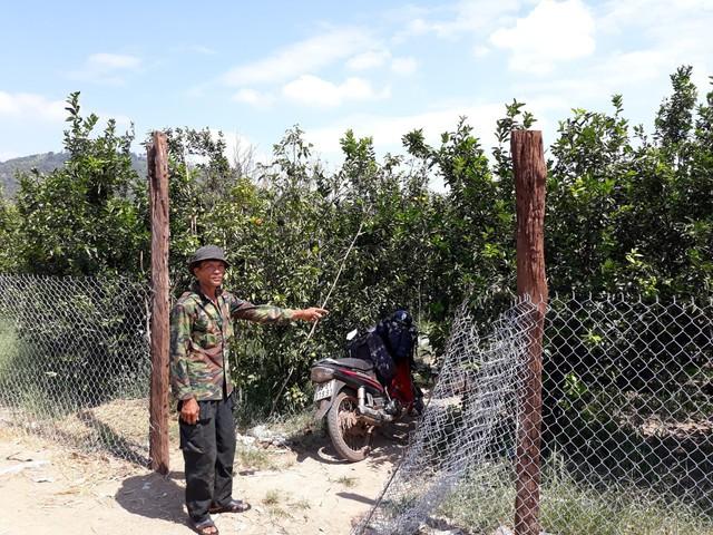 Vì trồng cây ăn quả nên xung quanh vườn ông Tân đều rào chắn cẩn thận để phòng mất trộm