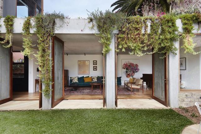 Những gốc cây, ngọn cỏ được trồng phía trên sân thượng rủ xuống hiên nhà đẹp nên thơ.