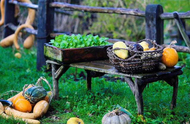 Những loài quả, rau và trái cây được tái hiện lại một cách sinh động.