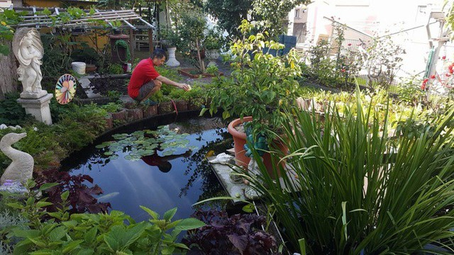 Trong khu vườn nhà mình, anh còn thiết kế một hồ cá cảnh. Mỗi khi rửa máy lọc của hồ cá, anh sử dụng bùn và phân cá đó đem tưới cho cây.