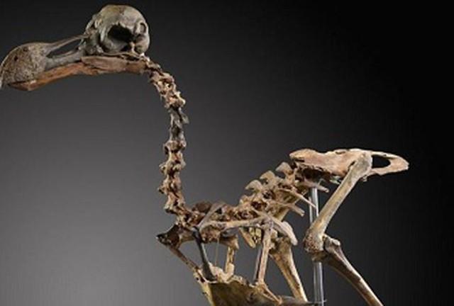 Bộ xương chim Dodo tuyệt chủng được bán với giá 430.000 USD. Ảnh: Summers Place Auctions.