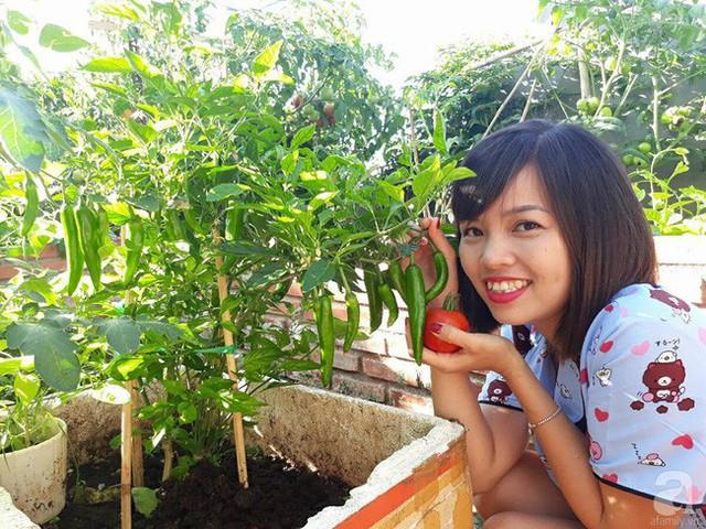 Góc vườn nhiều cây trái trên sân thượng.