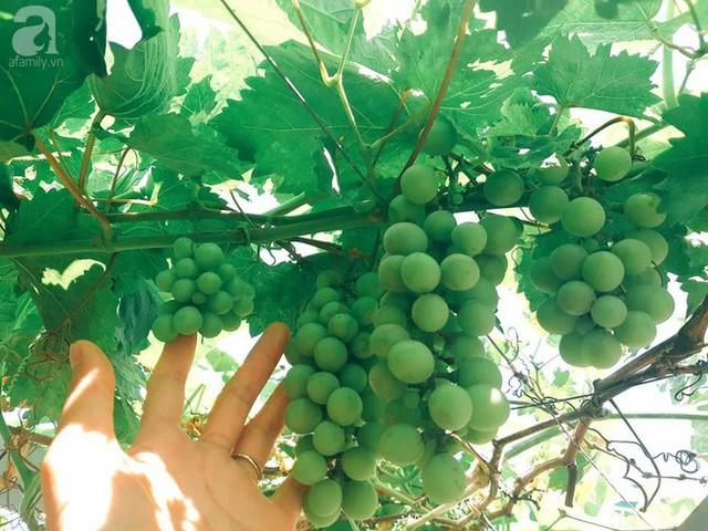Khoảng sân thượng quanh năm xanh tốt đủ loại rau quả.