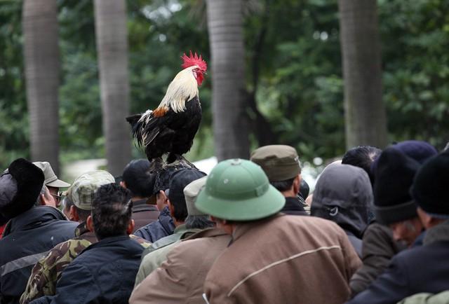 Chú gà trống ngự trên mũ đội đầu của thương binh tượng trưng cho niềm vui chiến thắng của đội tuyển.