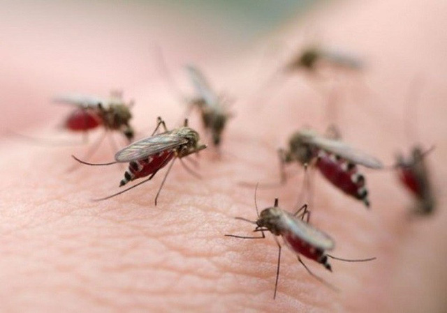 Hiện tại chưa tới đỉnh điểm của mùa truyền bệnh sốt rét. Sự xuất hiện của muỗi truyền bệnh ngày càng nhiều tại khu dân cư càng khiến việc phòng chống sốt rét thêm phức tạp. Ảnh: VTV
